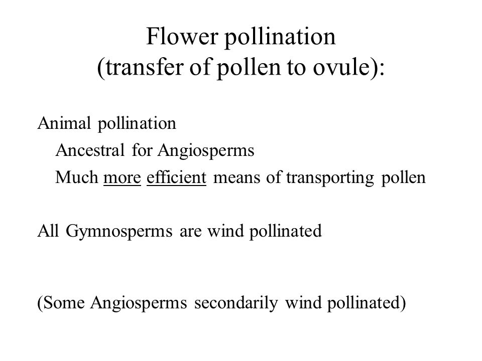 Flower pollination (transfer of pollen to ovule): Animal pollination Ancestral for Angiosperms Much more efficient means of transporting pollen All Gy