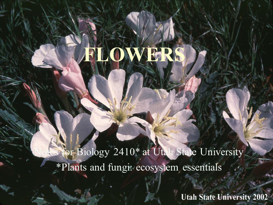 FLOWERS Notes for Biology 2410* at Utah State University *Plants and fungi: ecosystem essentials