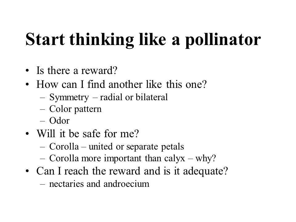 Start thinking like a pollinator Is there a reward? How can I find another like this one? –Symmetry – radial or bilateral –Color pattern –Odor Will it