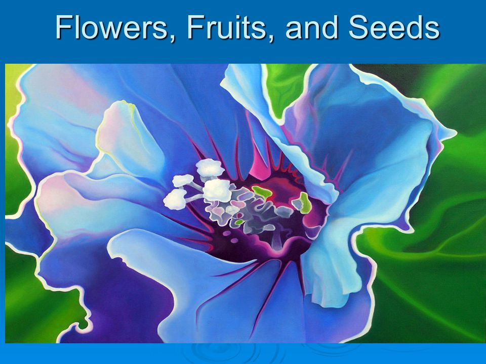 Flowers, Fruits, and Seeds