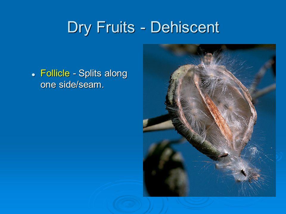 Dry Fruits - Dehiscent Follicle - Splits along one side/seam. Follicle - Splits along one side/seam.