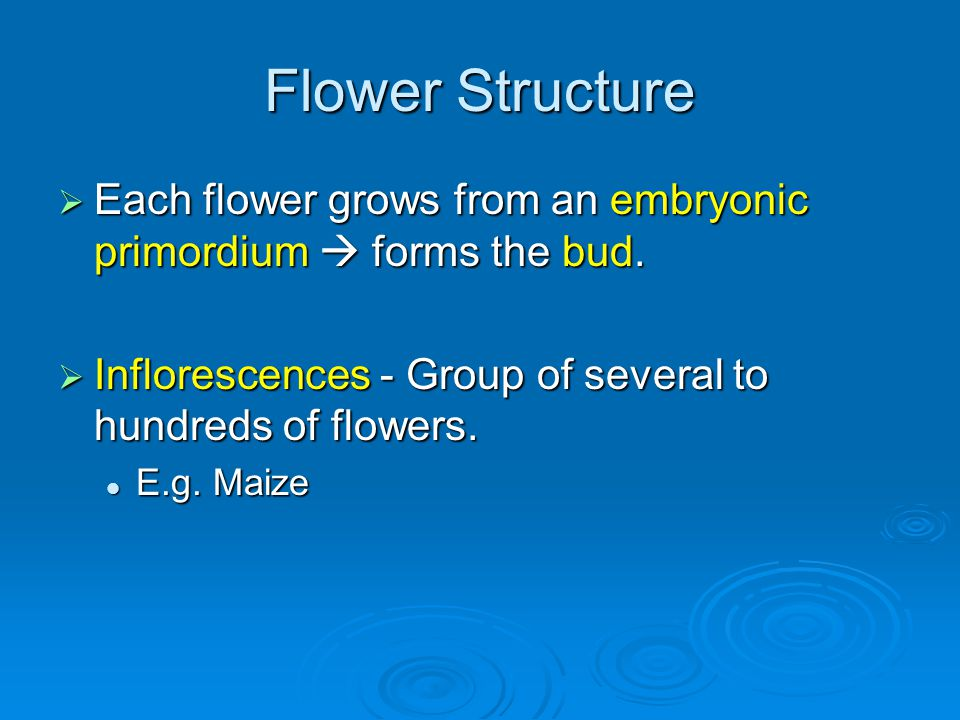 Flower Structure Each flower grows from an embryonic primordium forms the bud. Each flower grows from an embryonic primordium forms the bud. Infloresc