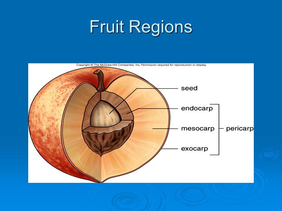 Fruit Regions