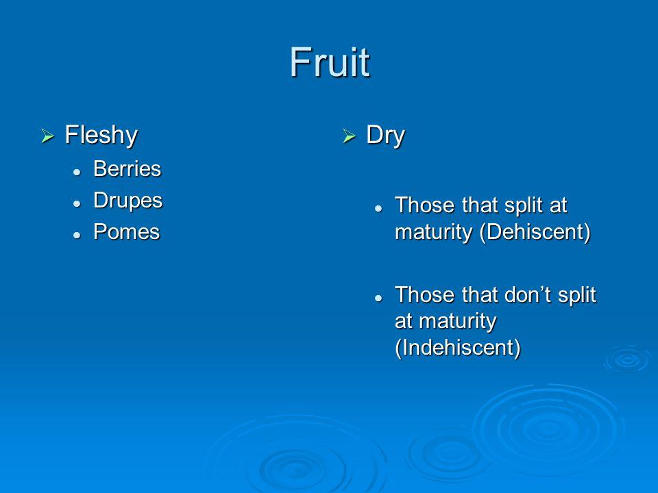 Fruit Fleshy Fleshy Berries Berries Drupes Drupes Pomes Pomes Dry Dry Those that split at maturity (Dehiscent) Those that dont split at maturity (Inde