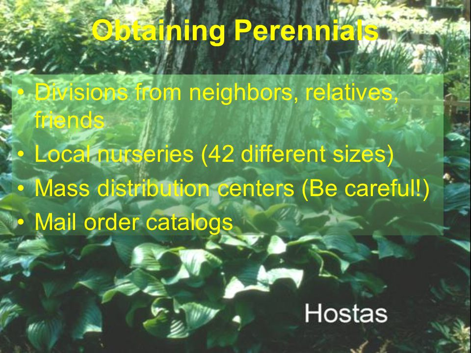 Obtaining Perennials Divisions from neighbors, relatives, friends Local nurseries (42 different sizes) Mass distribution centers (Be careful!) Mail or