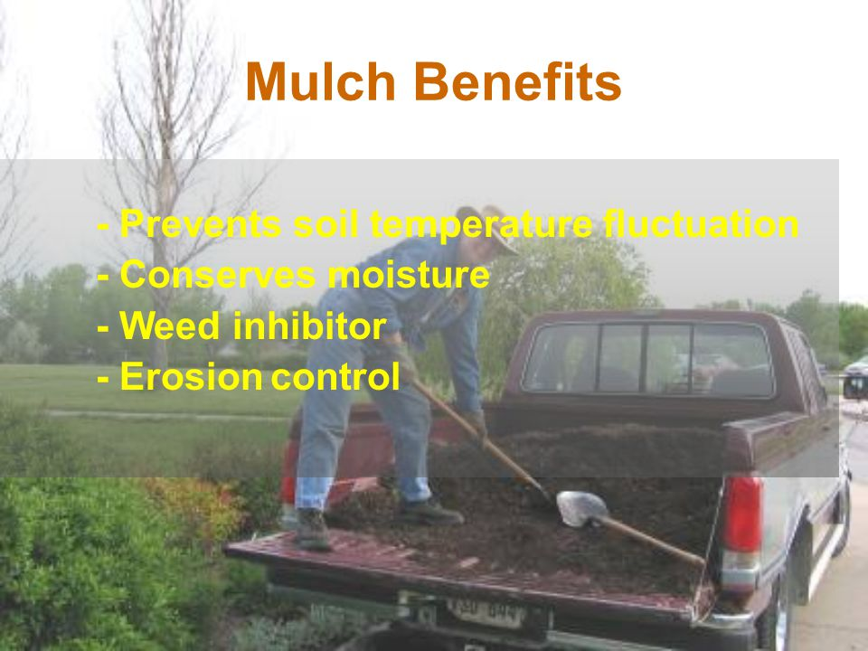 - Prevents soil temperature fluctuation - Conserves moisture - Weed inhibitor - Erosion control Mulch Benefits