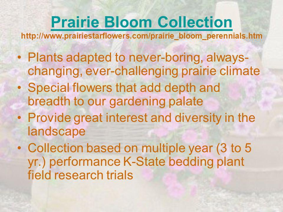 Prairie Bloom Collection Prairie Bloom Collection http://www.prairiestarflowers.com/prairie_bloom_perennials.htm Plants adapted to never-boring, alway