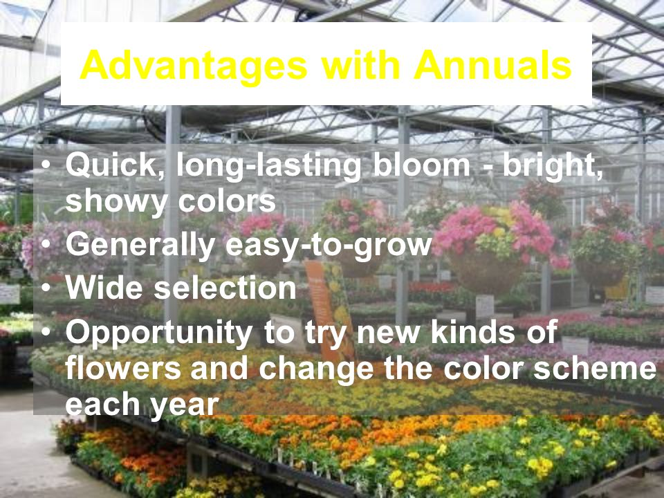 Advantages with Annuals Quick, long-lasting bloom - bright, showy colors Generally easy-to-grow Wide selection Opportunity to try new kinds of flowers