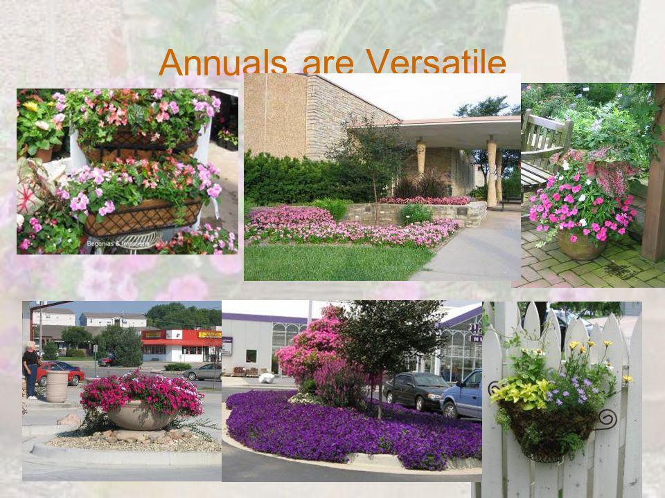 Annuals are Versatile