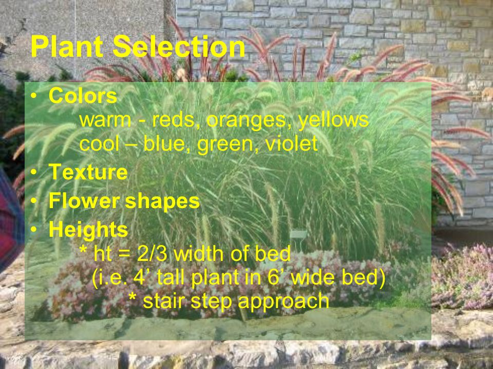 Plant Selection Colors warm - reds, oranges, yellows cool – blue, green, violet Texture Flower shapes Heights * ht = 2/3 width of bed (i.e. 4 tall pla