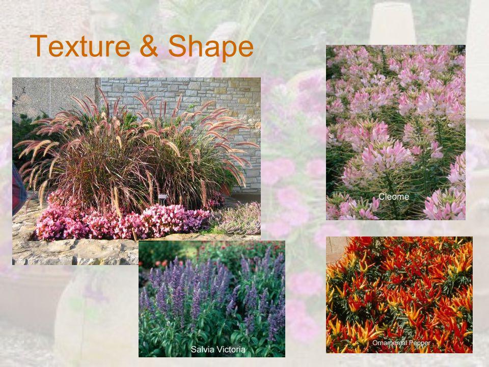 Texture & Shape