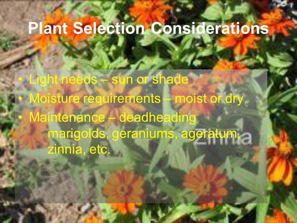 Plant Selection Considerations Light needs – sun or shade Moisture requirements – moist or dry Maintenance – deadheading marigolds, geraniums, ageratu