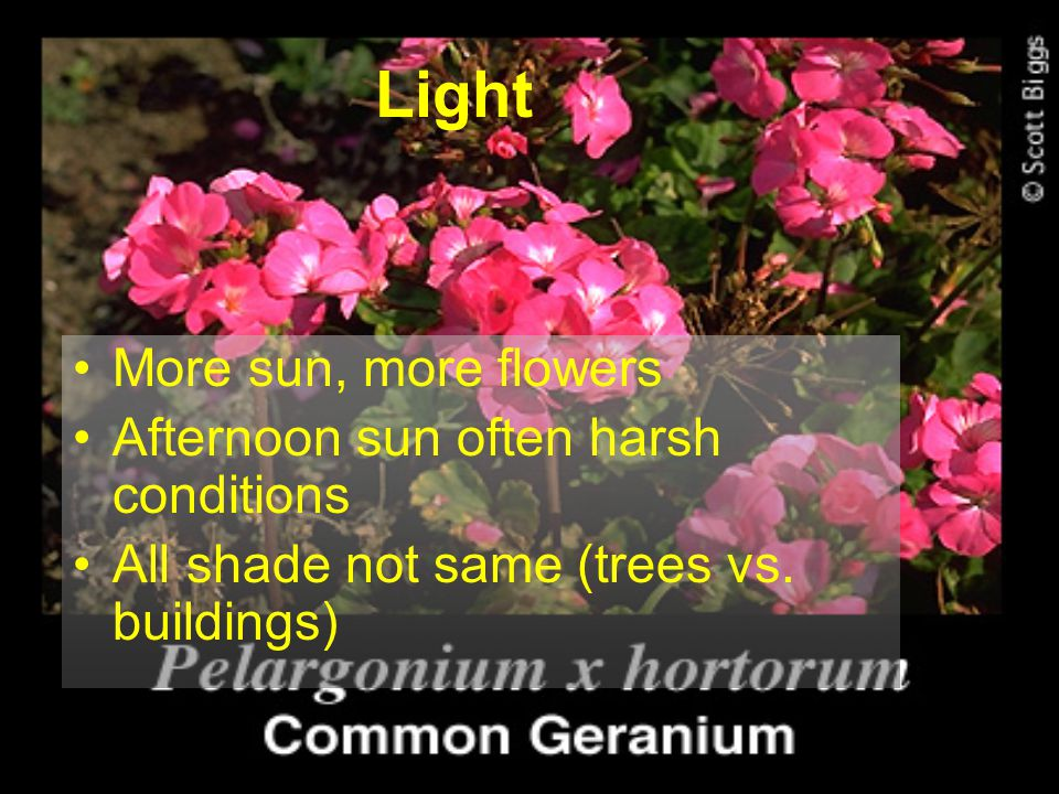 Light More sun, more flowers Afternoon sun often harsh conditions All shade not same (trees vs. buildings)
