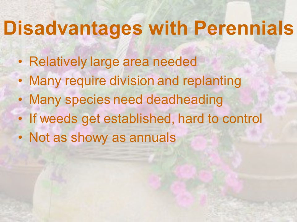 Disadvantages with Perennials Relatively large area needed Many require division and replanting Many species need deadheading If weeds get established