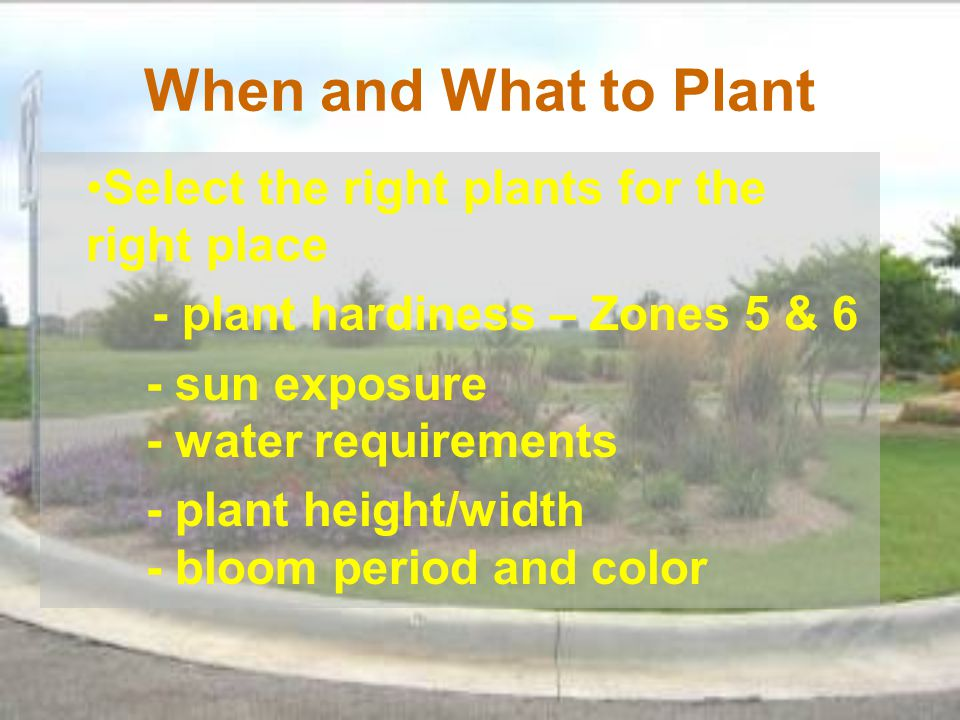 When and What to Plant Select the right plants for the right place - plant hardiness – Zones 5 & 6 - sun exposure - water requirements - plant height/