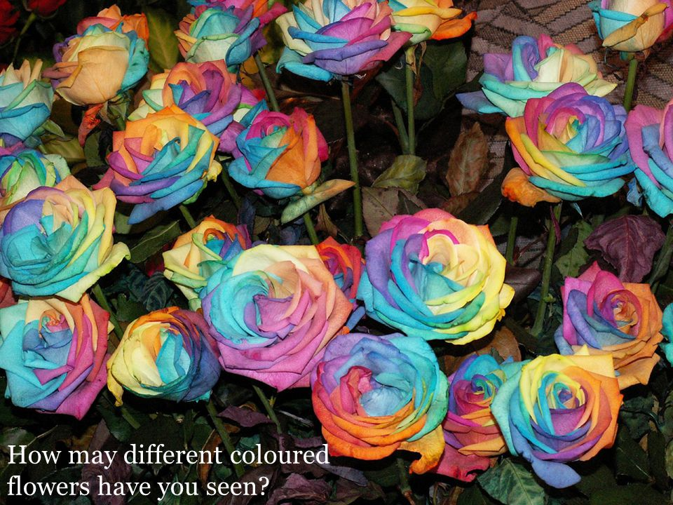 How may different coloured flowers have you seen?