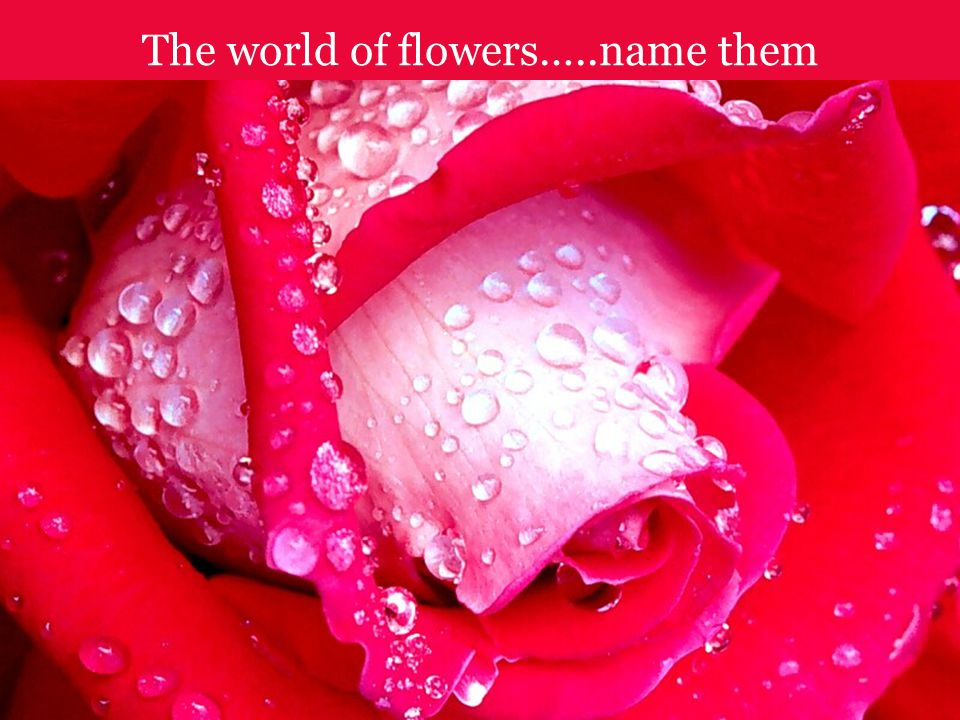 The world of flowers…..name them