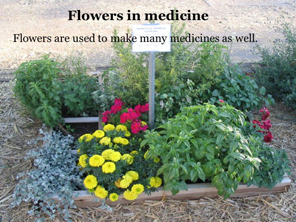 Flowers in medicine Flowers are used to make many medicines as well.