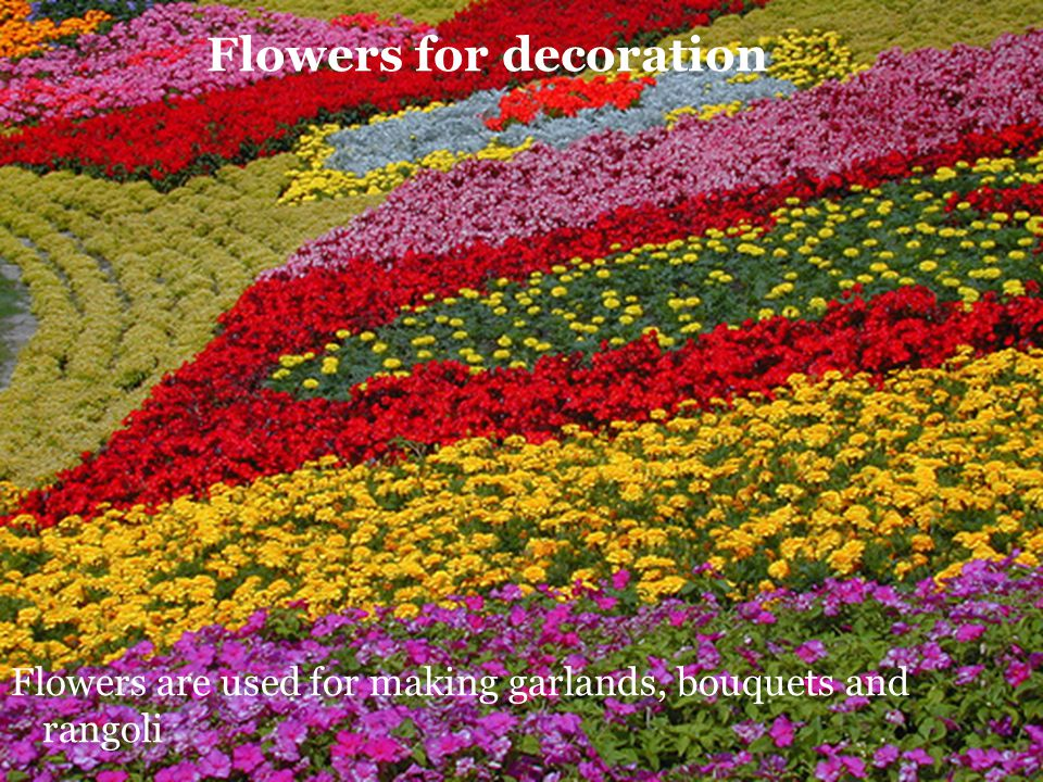 Flowers for decoration Flowers are used for making garlands, bouquets and rangoli