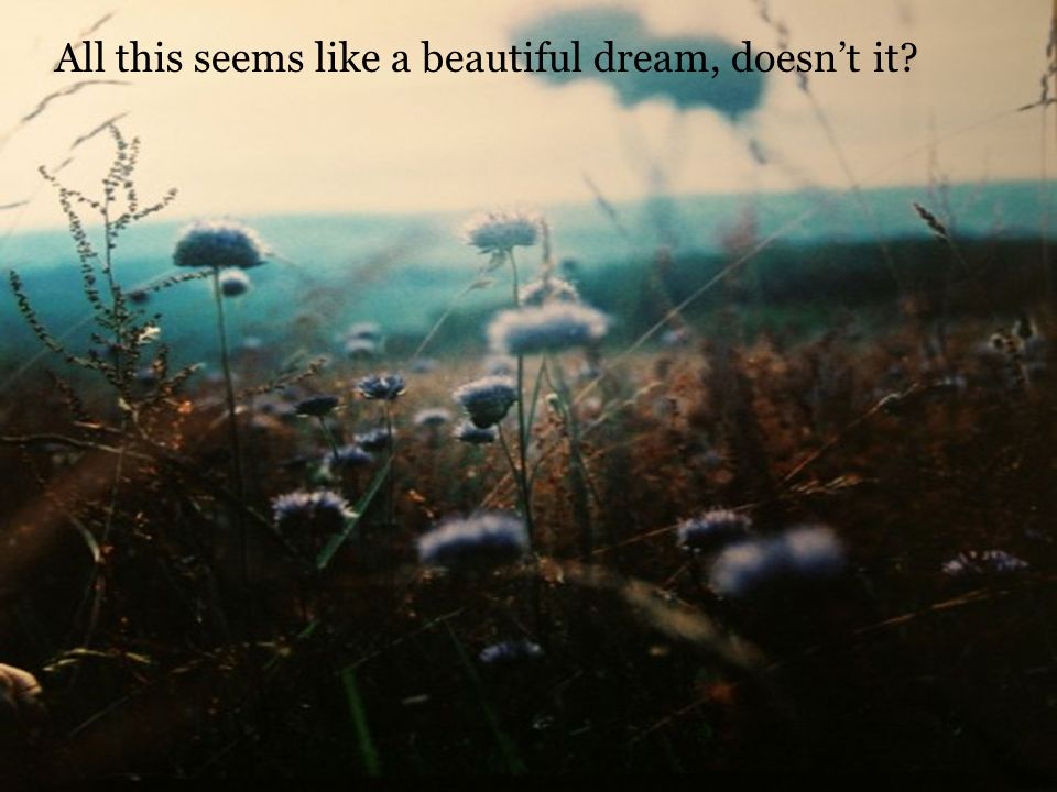 All this seems like a beautiful dream, doesnt it?