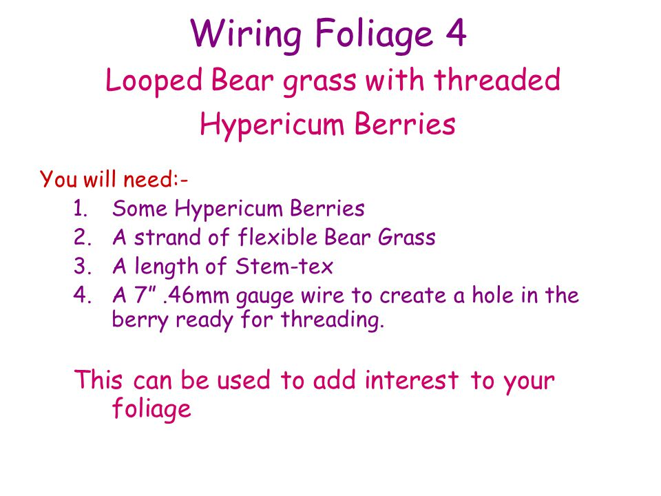 Wiring Foliage 4 Looped Bear grass with threaded Hypericum Berries You will need:- 1.Some Hypericum Berries 2.A strand of flexible Bear Grass 3.A length of Stem-tex 4.A 7.46mm gauge wire to create a hole in the berry ready for threading.
