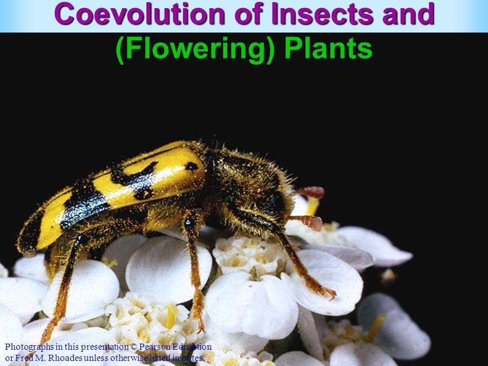 Benefits to the pollinators.
