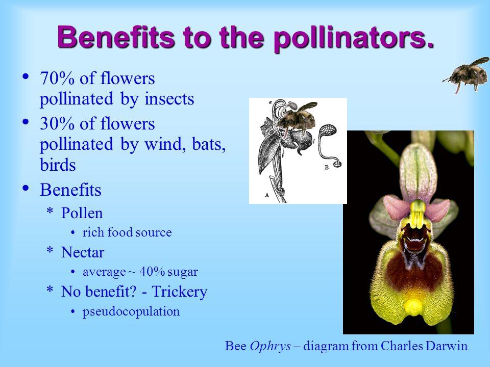 Benefits to the pollinators. 70% of flowers pollinated by insects 30% of flowers pollinated by wind, bats, birds Benefits *Pollen rich food source *Ne
