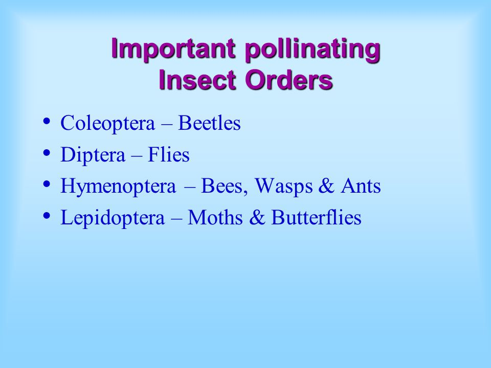 Important pollinating Insect Orders Coleoptera – Beetles Diptera – Flies Hymenoptera – Bees, Wasps & Ants Lepidoptera – Moths & Butterflies
