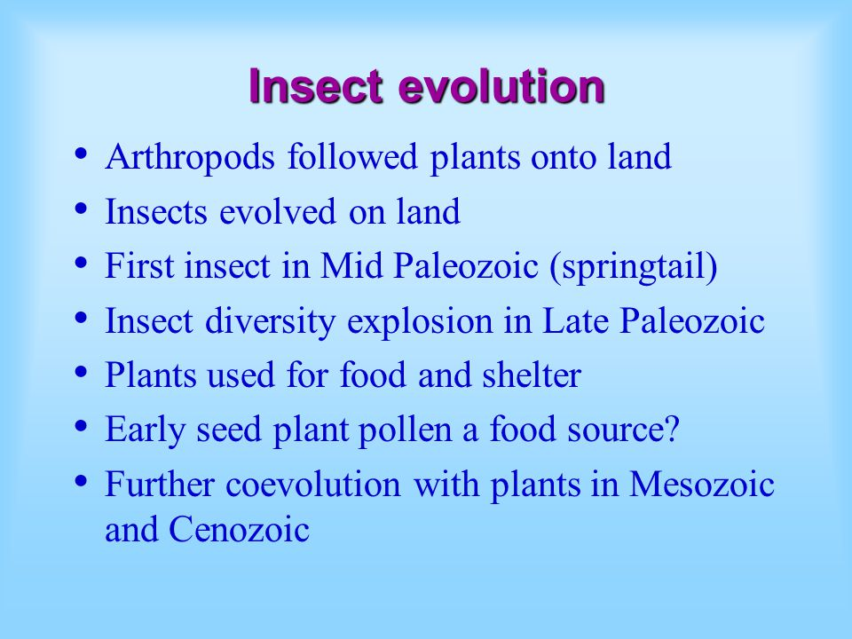 Insect evolution Arthropods followed plants onto land Insects evolved on land First insect in Mid Paleozoic (springtail) Insect diversity explosion in