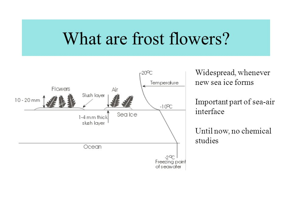 What are frost flowers.