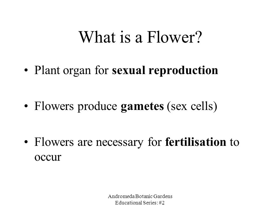 Andromeda Botanic Gardens Educational Series: #2 What is a Flower? Plant organ for sexual reproduction Flowers produce gametes (sex cells) Flowers are