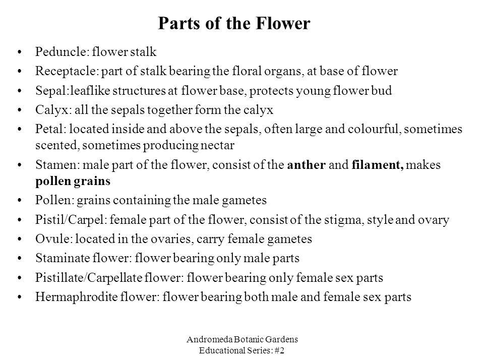 Andromeda Botanic Gardens Educational Series: #2 Parts of the Flower Peduncle: flower stalk Receptacle: part of stalk bearing the floral organs, at ba