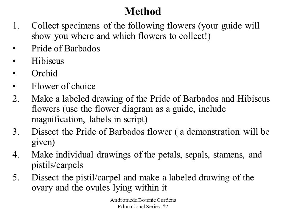 Andromeda Botanic Gardens Educational Series: #2 Method 1.Collect specimens of the following flowers (your guide will show you where and which flowers
