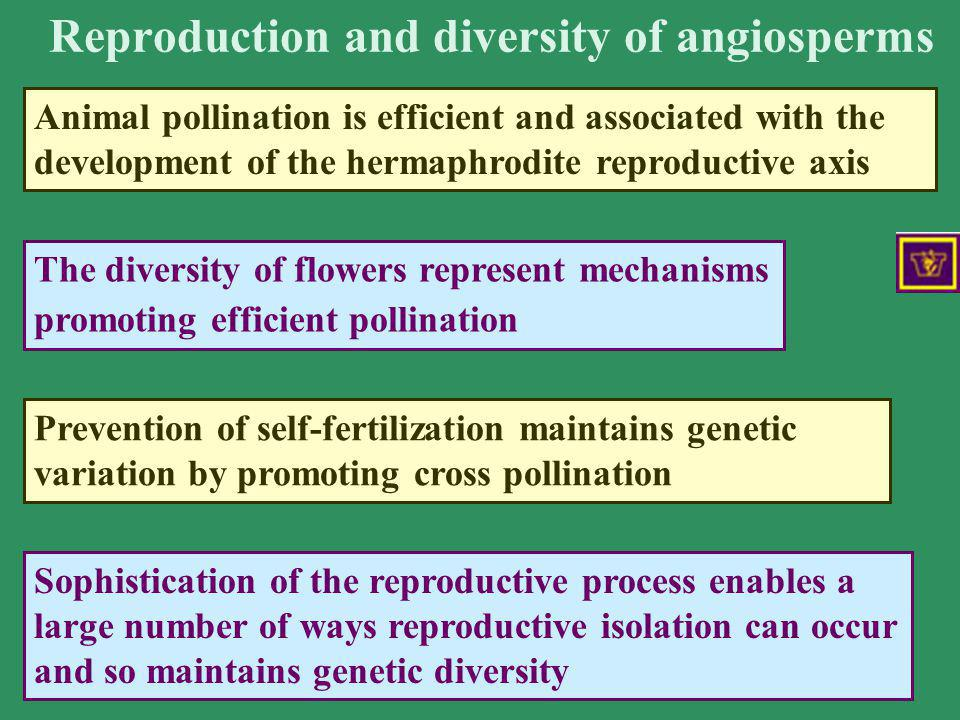 Reproduction and diversity of angiosperms Animal pollination is efficient and associated with the development of the hermaphrodite reproductive axis T