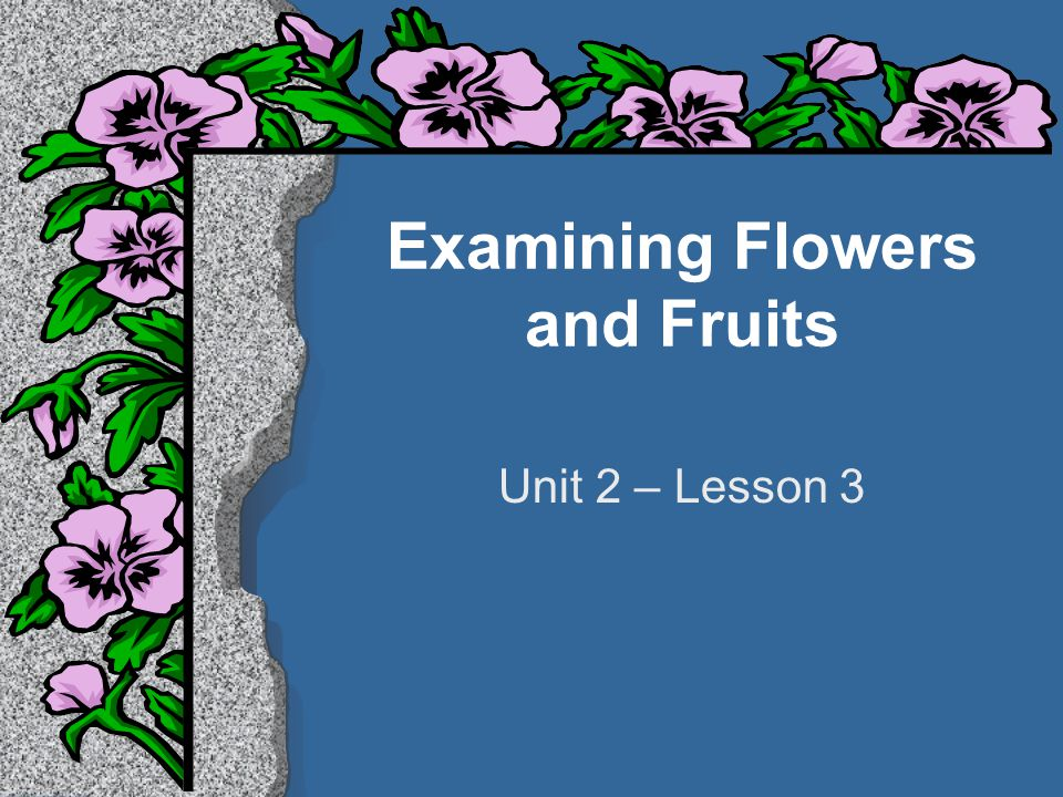Examining Flowers and Fruits Unit 2 – Lesson 3