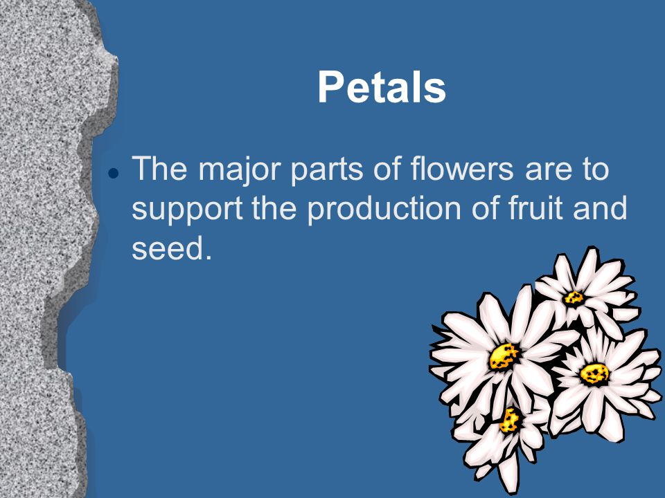 Petals l The major parts of flowers are to support the production of fruit and seed.