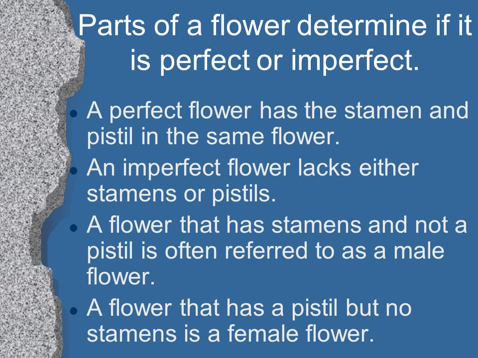 Parts of a flower determine if it is perfect or imperfect. l A perfect flower has the stamen and pistil in the same flower. l An imperfect flower lack