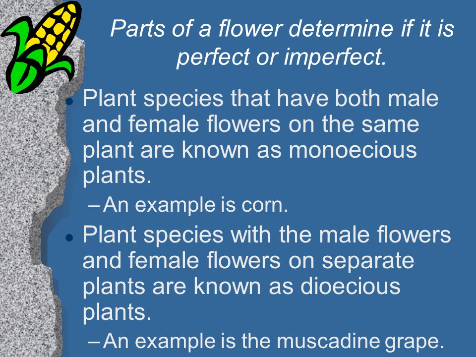 Parts of a flower determine if it is perfect or imperfect. l Plant species that have both male and female flowers on the same plant are known as monoe