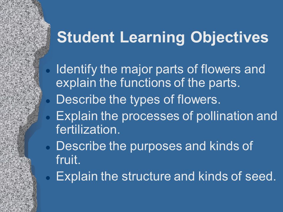 Student Learning Objectives l Identify the major parts of flowers and explain the functions of the parts.