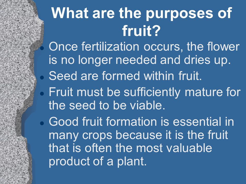 What are the purposes of fruit.
