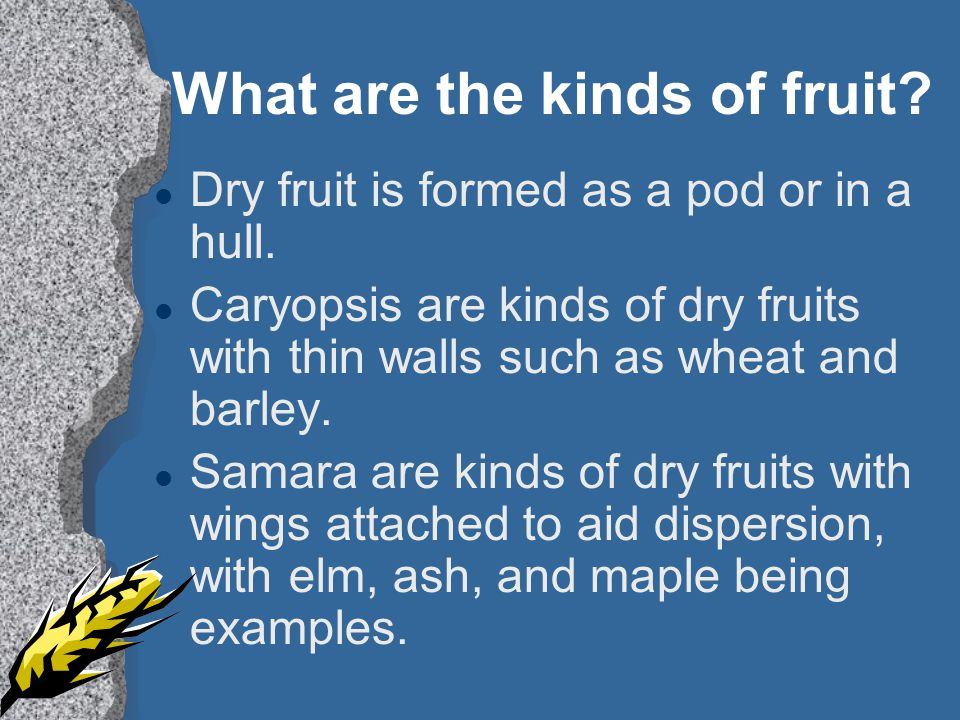 What are the kinds of fruit.l Dry fruit is formed as a pod or in a hull.