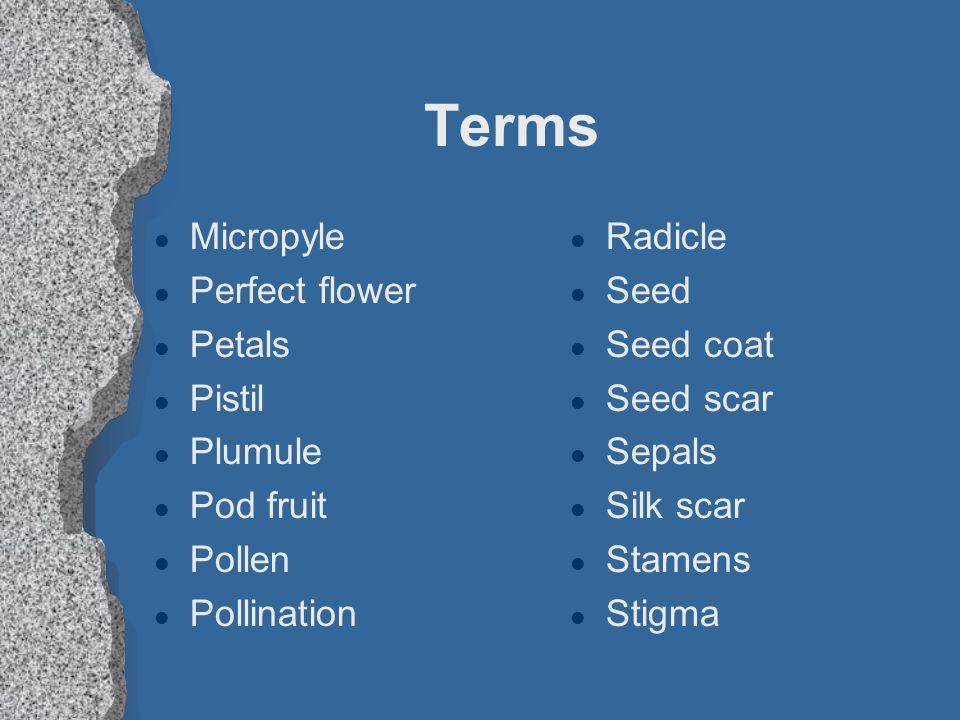 Terms l Micropyle l Perfect flower l Petals l Pistil l Plumule l Pod fruit l Pollen l Pollination l Radicle l Seed l Seed coat l Seed scar l Sepals l