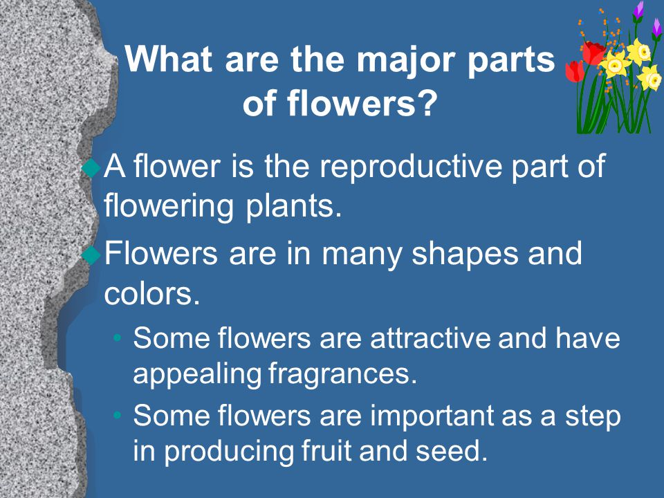 What are the major parts of flowers.u A flower is the reproductive part of flowering plants.