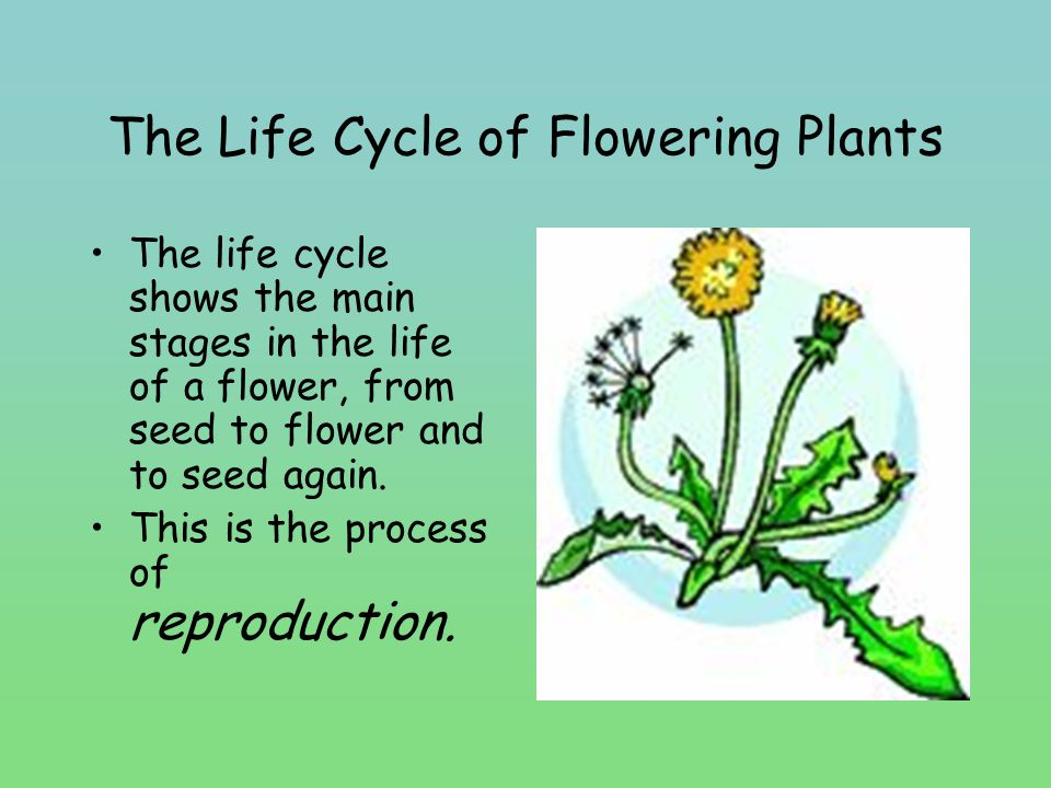 Write these words in the boxes: germination, fertilization, pollination, seed dispersal, parent plant, plant growth 1 2 4 5 3 6