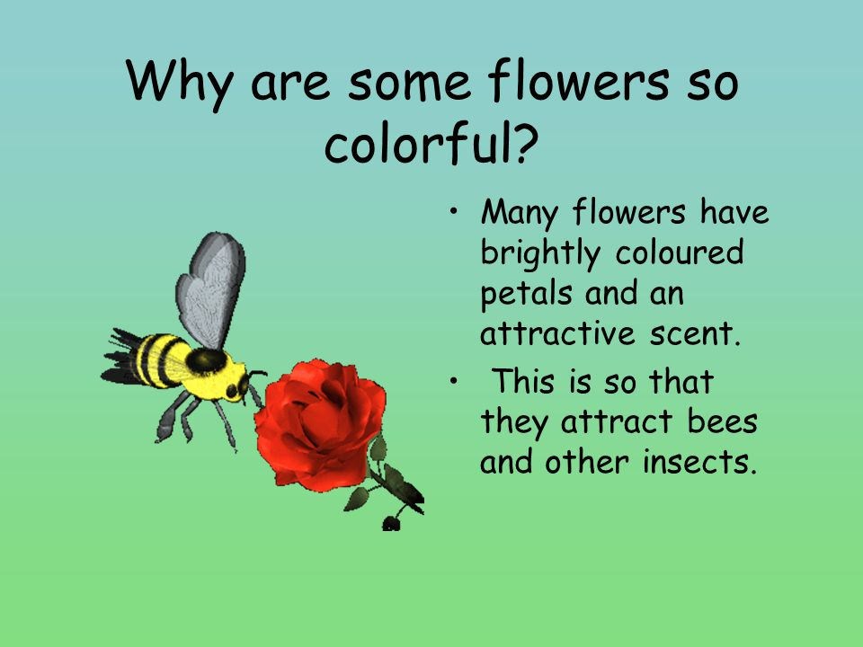 What does a flower do.
