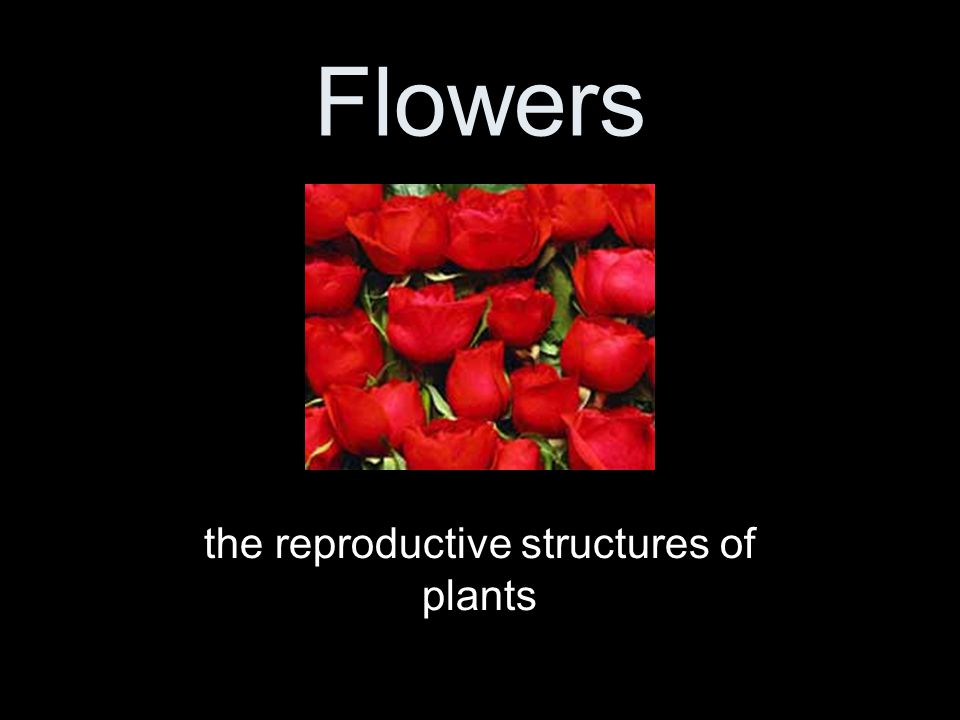 Flowers the reproductive structures of plants