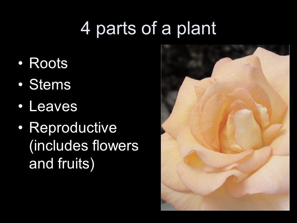Flowers have 4 different parts Sepals Petals Stamens Pistil