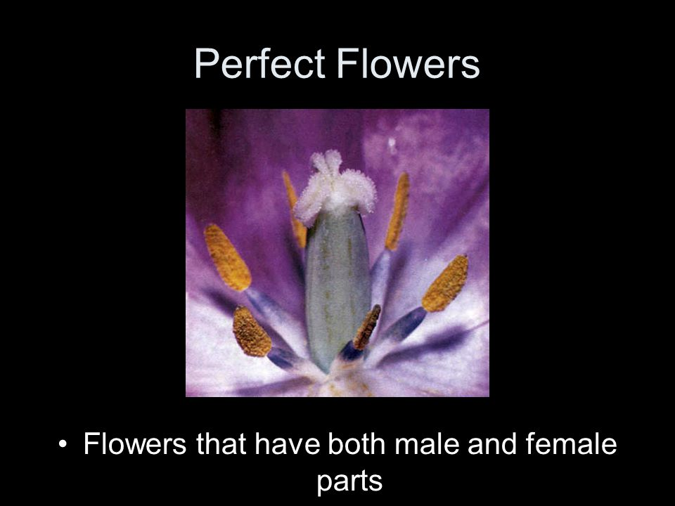 Perfect Flowers Flowers that have both male and female parts