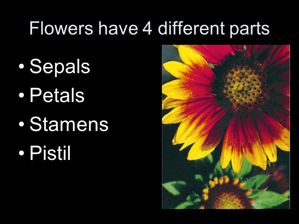Pistil The female part of the flower