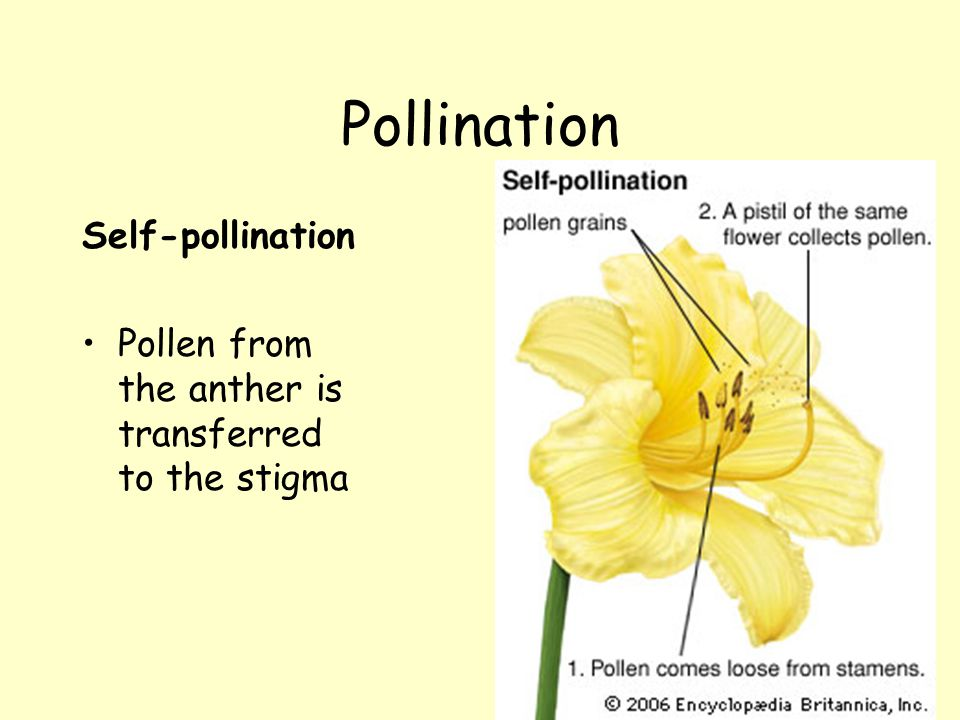 Pollination and Fertilisation Standard Grade Biology